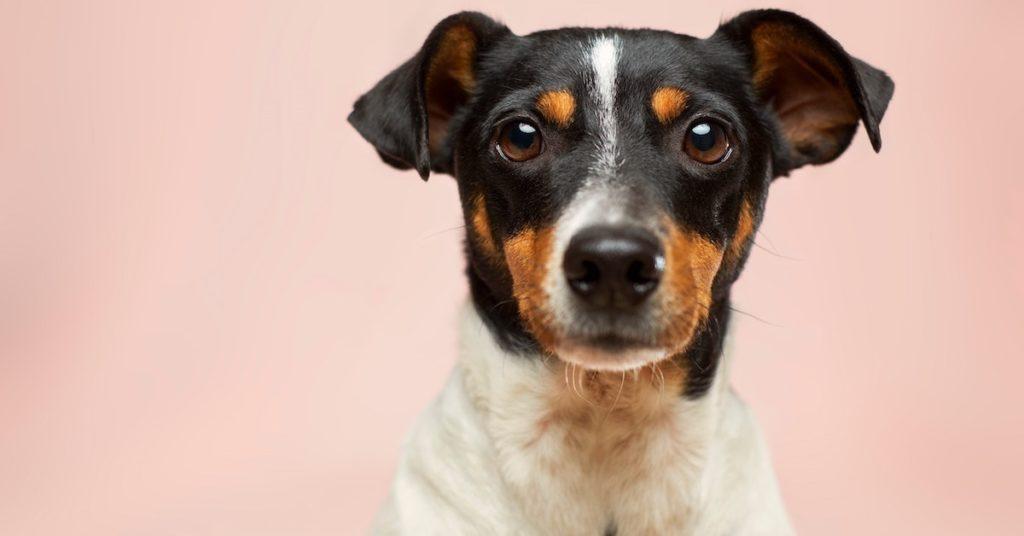 Mylonas, Mylonas & O'Callaghan & Associates Veterinary Hospital